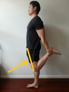 anterior pelvic tilt stretches