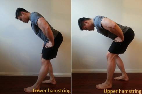 hamstring stretches for sway back posture