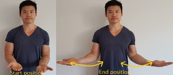 external rotation of the shoulder